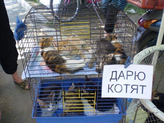 Схема проезда на Птичий рынок